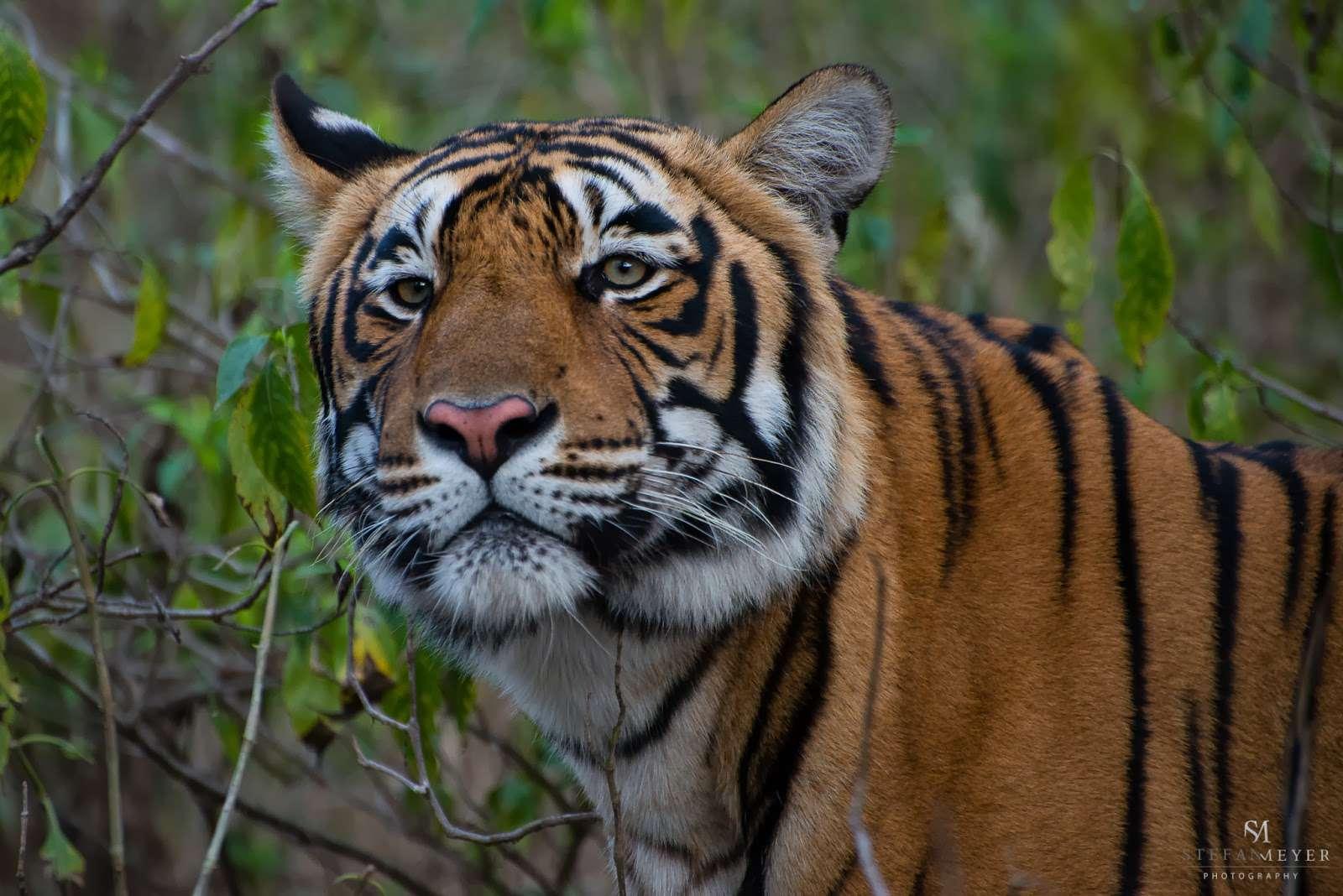 Tigre - Inde : Stefan Meyer Travel Blog – L'Inde et la redéfinition de la normalité