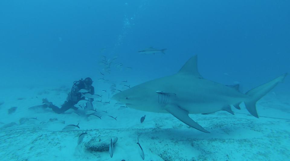 Requin - 10 conseils essentiels pour un roadtrip au Mexique - Nomad Junkies