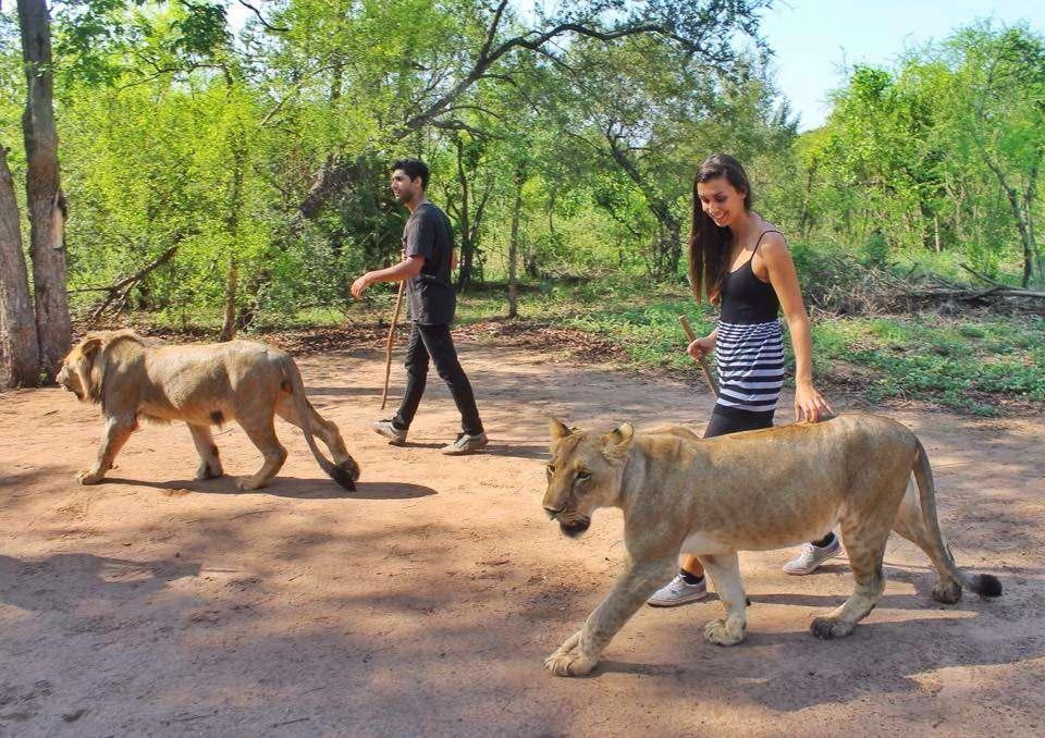 Safari (Afrique) - Top 20 des endroits à explorer avant de mourir - Nomad Junkies