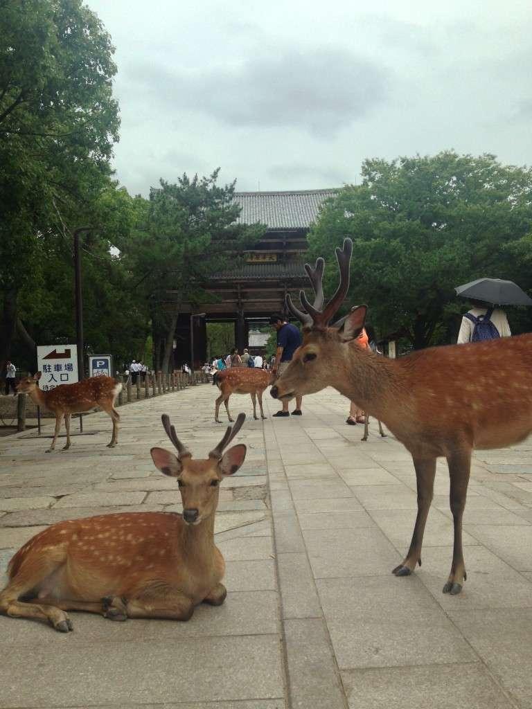 Nara - Konnichiwa Japon - Nomad Junkies