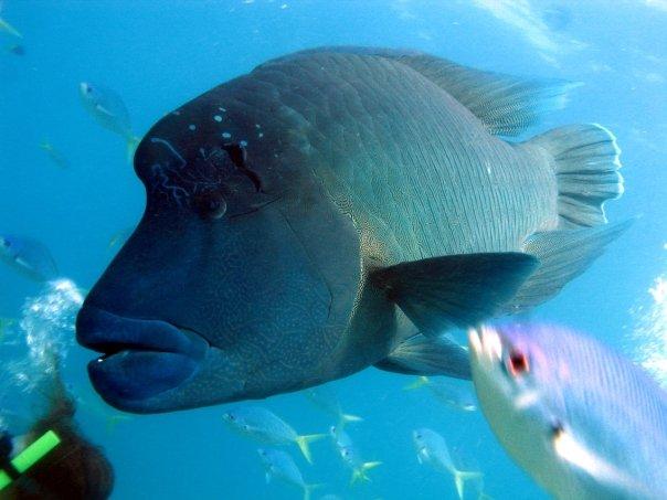 Whitsundays - Plongée en apnée - Nomad Junkies