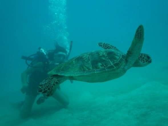 8 questions école de plongée - Nomad Junkies