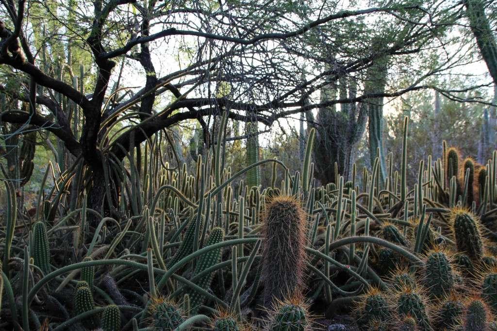 Desert botanical garden Arizona Nomad Junkies