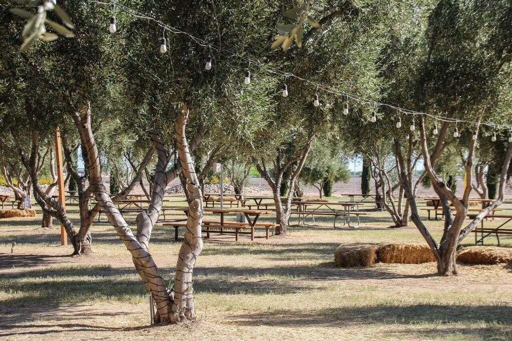 Olive Creek Mills Arizona Nomad Junkies