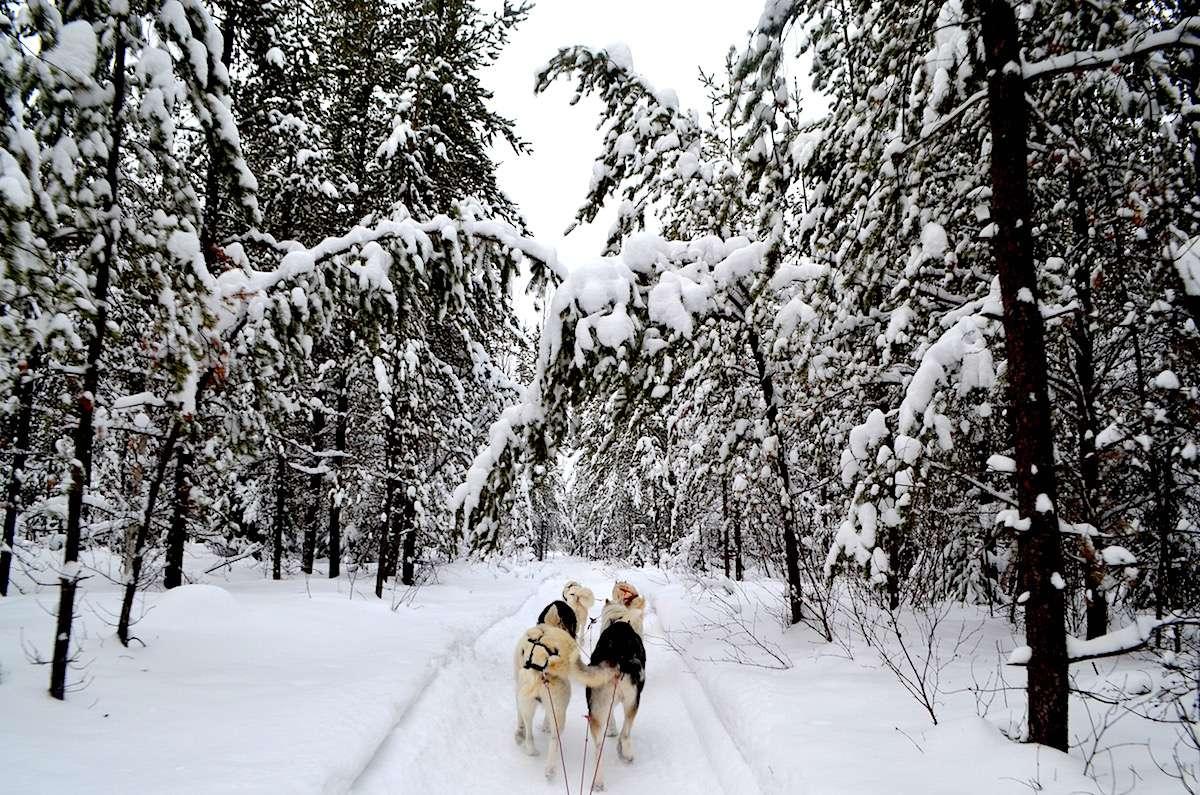 Traineau à chiens Abitibi Temiscamingue Nomad Junkies