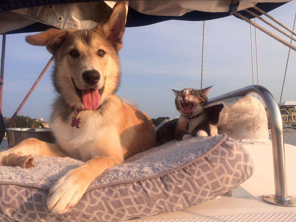 Animaux - Portrait de nomades : Lindsay et Nicolas en voilier autour du monde - Nomad Junkies