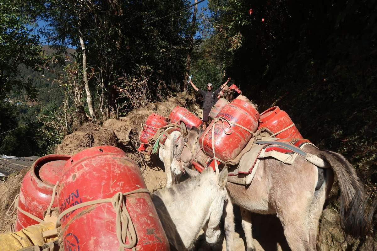 Ânes - Katmandou à l'Everest : 21 jours de trek par l'ancienne route - Nomad Junkies