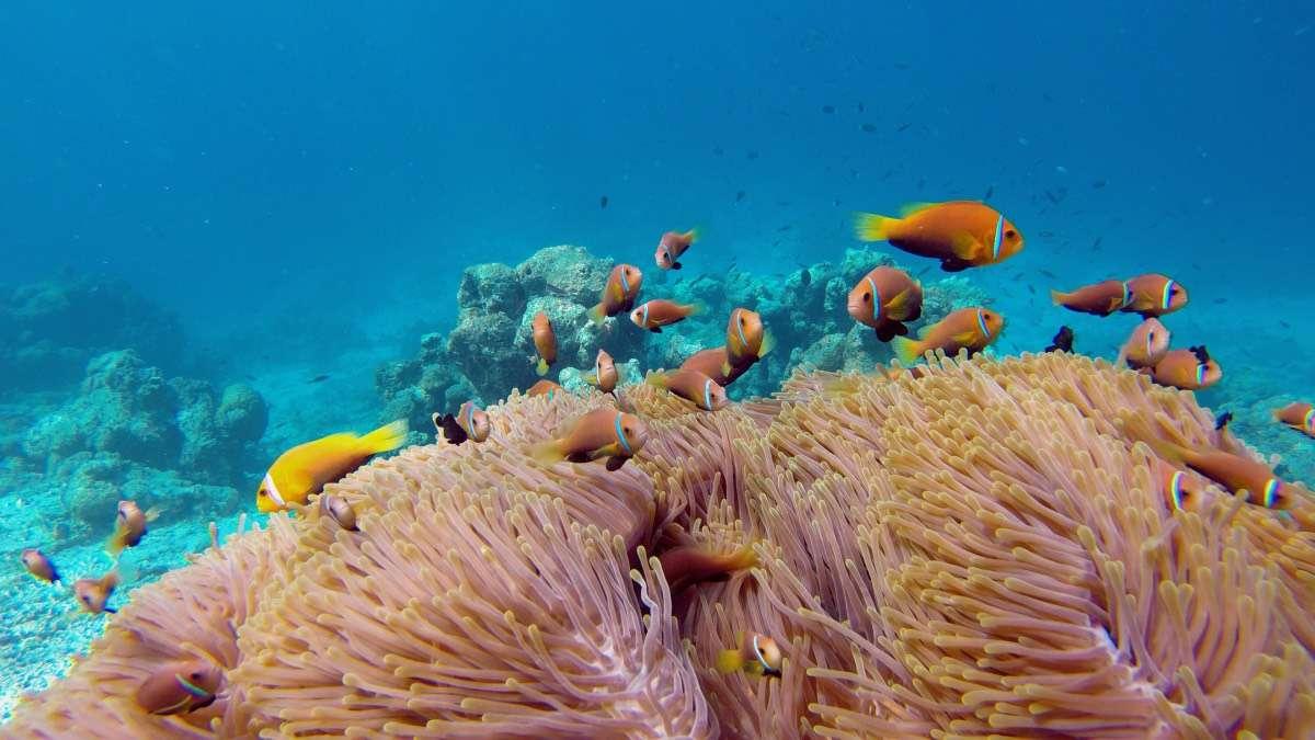 Nemos - Maldives : 10 raisons pourquoi ça devrait être ta prochaine destination de rêve - Nomad Junkies