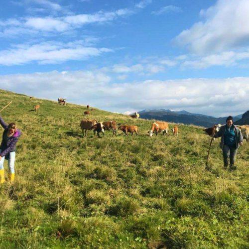 Hoidarin : explorer les Alpes grâce à un métier hors de l'ordinaire