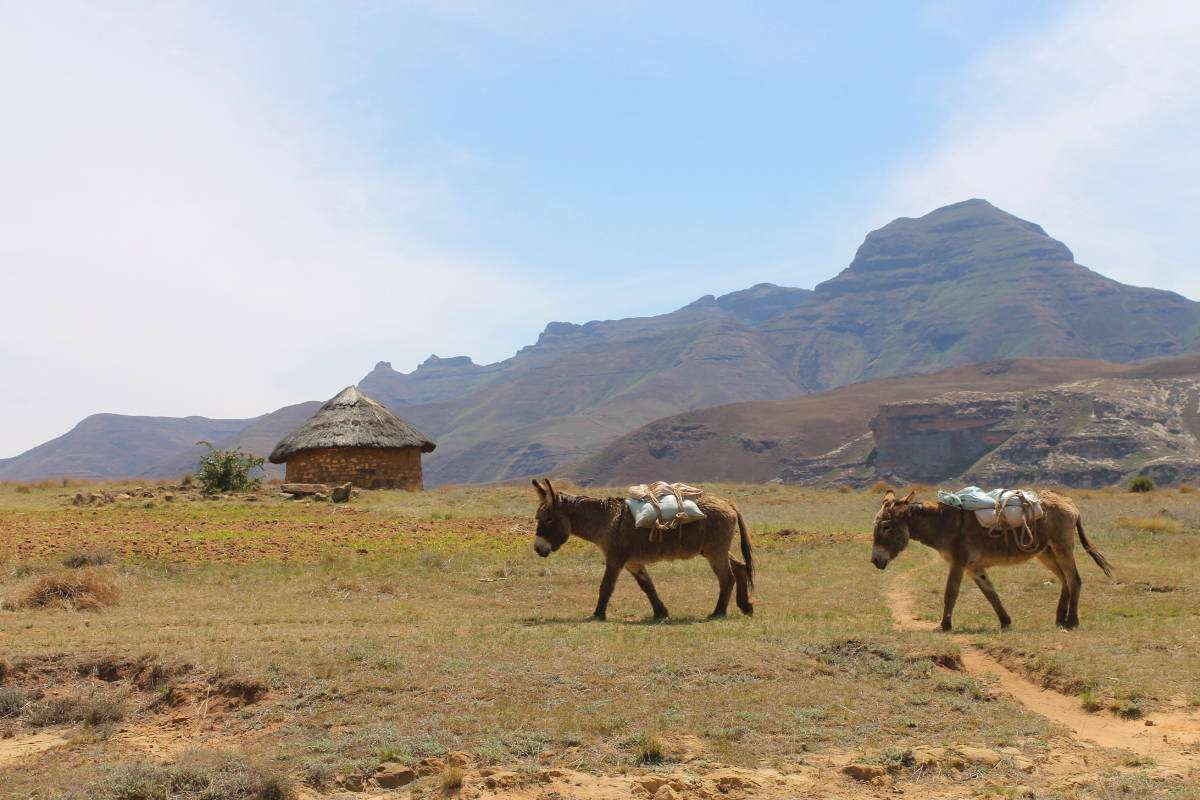 Lesotho - Nomad Junkies
